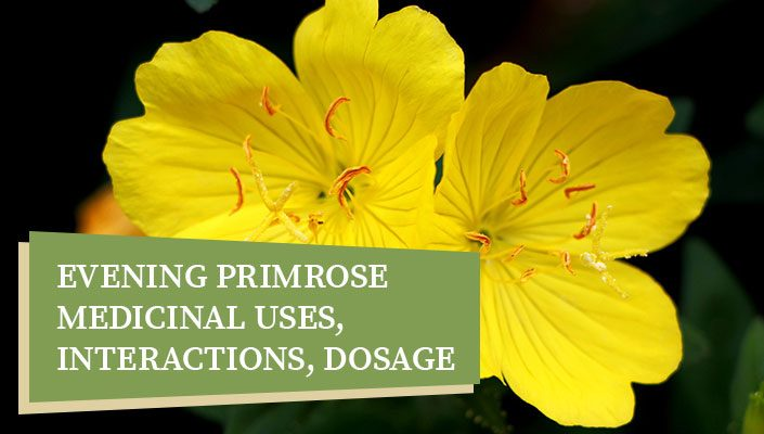 Evening Primrose – Medicinal Uses, Interactions, Dosage