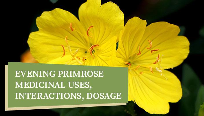 Evening Primrose – Medicinal Uses, Interactions, Dosage