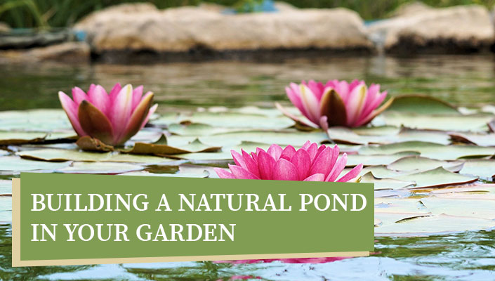 Building a Natural Pond in Your Garden